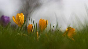 Voorjaar (1) van Willemke de Bruin