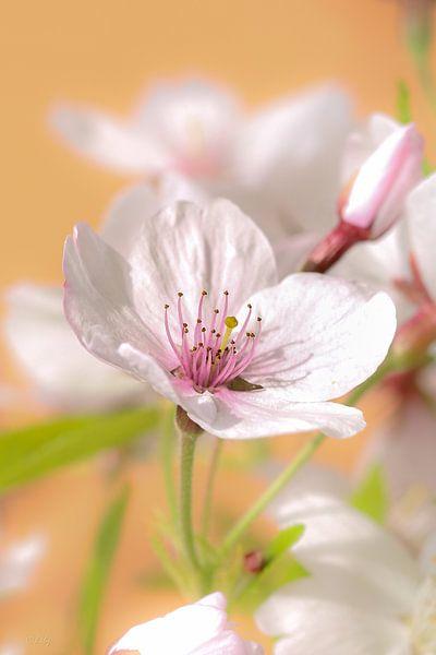 Bloesem close-up van Lily Ploeg