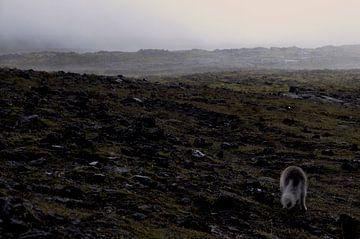 IJsland - Poolvos van Willem van den Berge