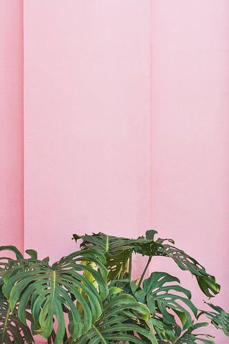 Planten op roze van