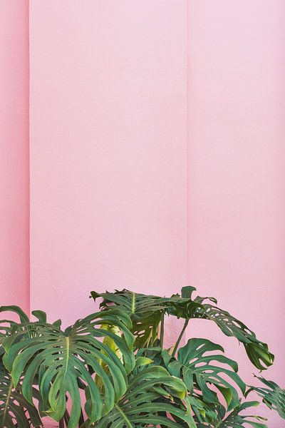 Planten op roze