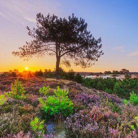 Kleurrijk heidelandschap bij zonsopkomst van Karla Leeftink