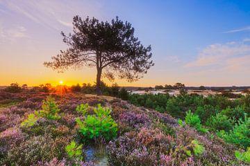 Kleurrijk heidelandschap bij zonsopkomst van