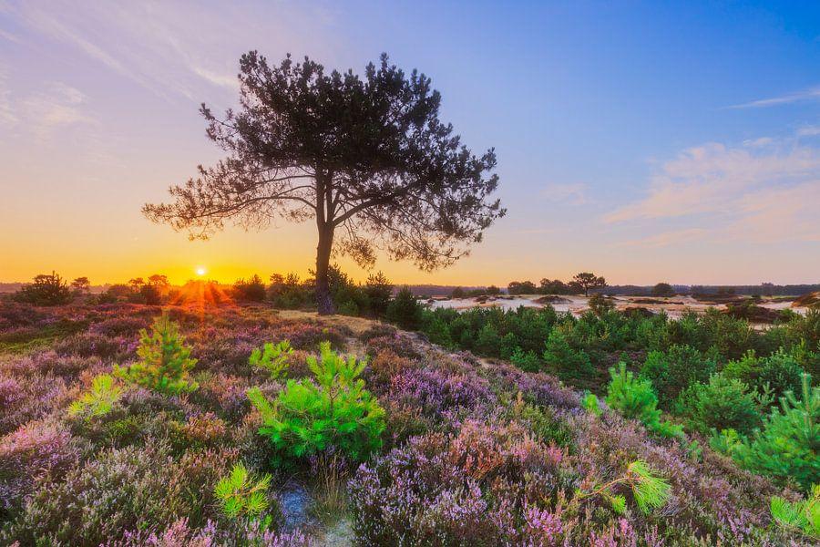 Kleurrijk heidelandschap bij zonsopkomst