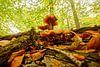 boom met paddenstoelen en bladeren van Dirk van Egmond thumbnail