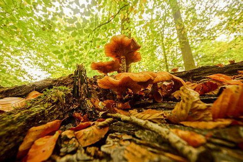 boom met paddenstoelen en bladeren