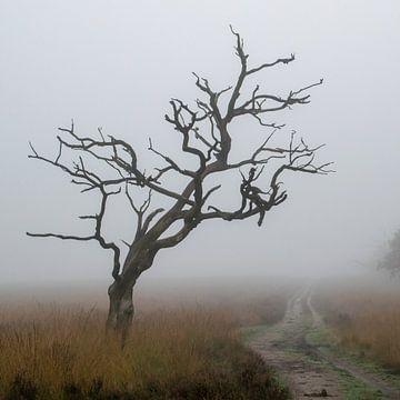 Baumrahmen im Nebel von Saskia Pasman