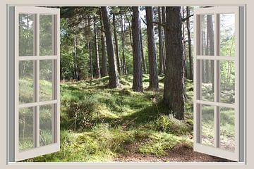 Wald-Ansicht von Co Seijn