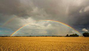 Regenbogen über dem Feld
