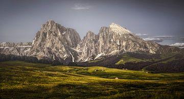 Almwiese Dolomiten von Peter Poppe