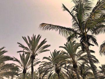 Palmbomen van Remco Alberts