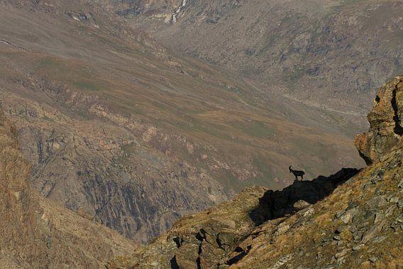 Een steenbok staat op het randje van de afgrond bij de gornergrat in zwitserland