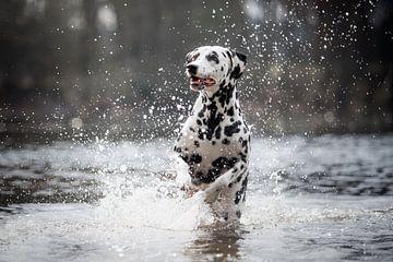 Foto einer dalmatinischen Hundeaktion am Wasser von Lotte van Alderen