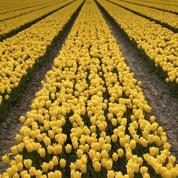 Yellow Tulips 3 van Arjan Benders