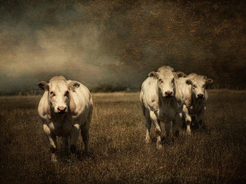 3 Kühe von Marijke de Haze
