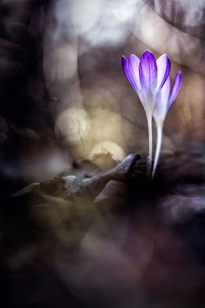Always flowers van Bob Daalder