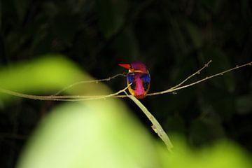 Wildlife in tropisch regenwoud van Anke Akkermans