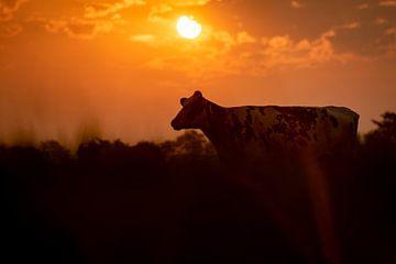 Koe met zonsopkomst van Els Korsten