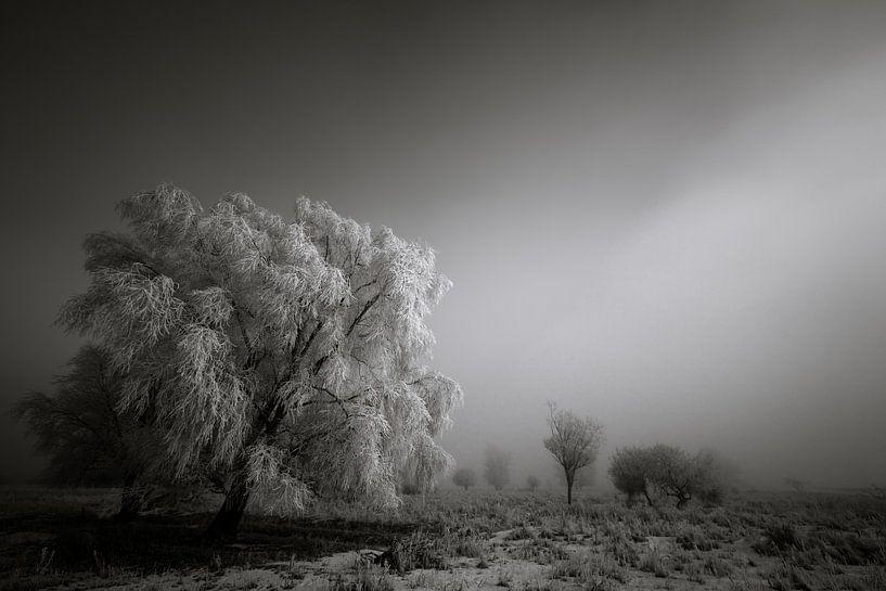 Winter Darkness - Lauwersmeer, The Netherlands van Bas Meelker