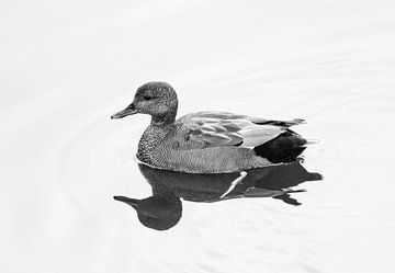Ente in hoher Auflösung fotografiert (S/W) von Kees Ham