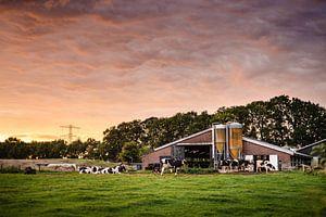 Boerderij met koeien tijdens zonsondergang van