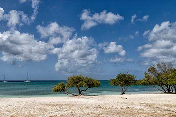 Aruba von Marly De Kok