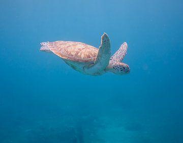 Zeeschildpad van Jon Geypen