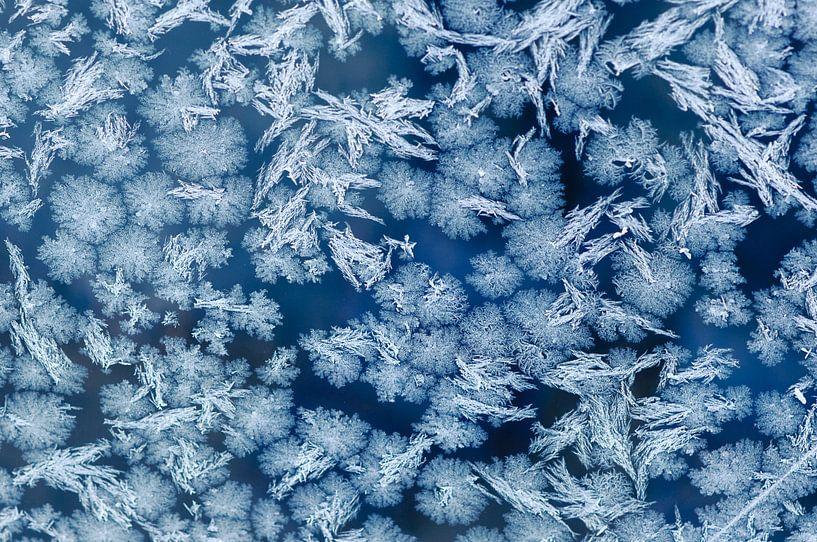 Freezing cold van Laura Vink