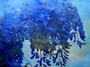 Blaue Blume Regen von Anita Snik-Broeken