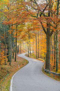 Weg door het herfstbos