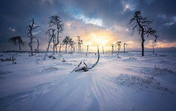 Noir-Flohay-Skelettbäume von Tomas van der Weijden