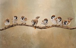 Vogels Op Tak