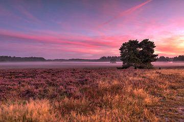 Morgenrot auf der Heide von Fotografie Ronald