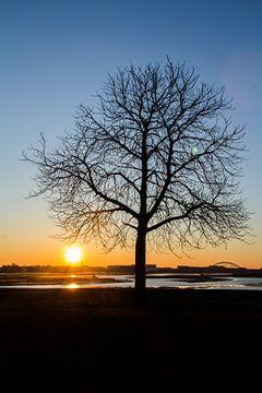 Baum von Leonard Boshuizen