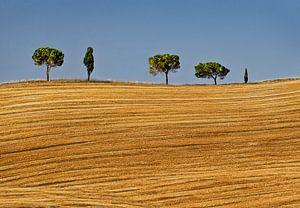 Bomenrij in Toscane van