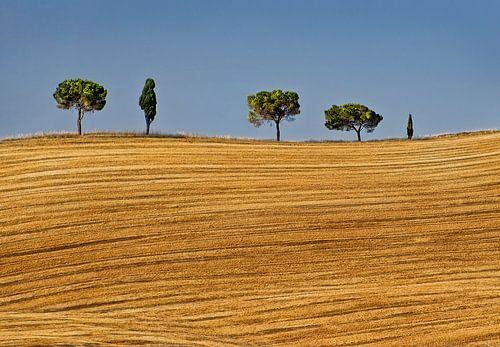 Bomenrij in Toscane van Marcel van Balken