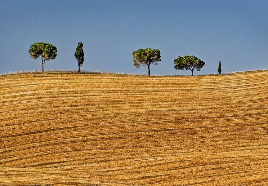 Bomenrij in Toscane