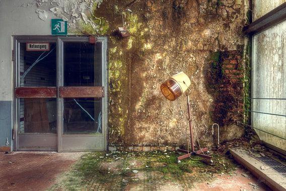 Schimmel Muur. van Roman Robroek