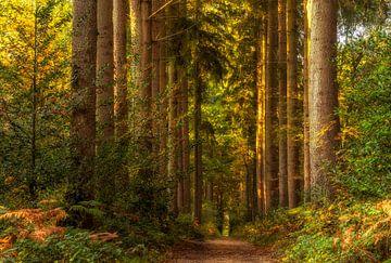 Herfst in het Vijlenerbos in Zuid-Limburg
