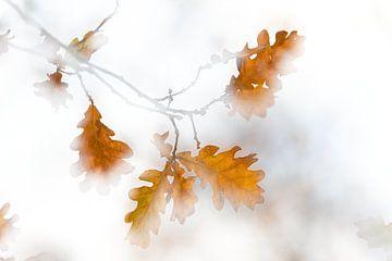 herfst van Ingrid Van Damme fotografie