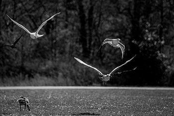 Fliegende Möwen von Marcel van Berkel