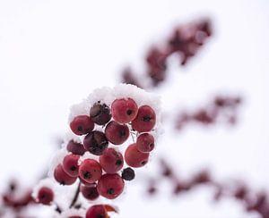 Rood en wit