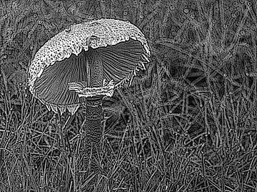 Parasolpilz. von Jose Lok