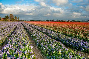 Tulpen veld in amsterdam van Photography by Naomi.K