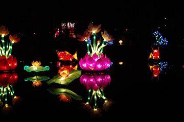 Lotus light van Jan Pott