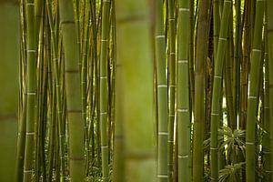 Bamboe sur Leon van Voornveld