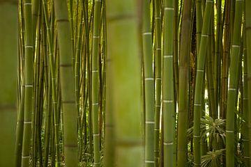 Bamboe van Leon van Voornveld