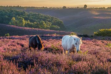 Wild horses van Patrick Rodink