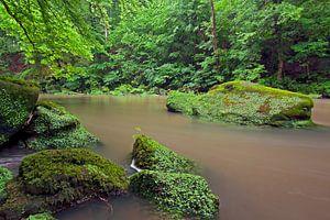 Riviertje met rosten, baant een weg door een groenachtig bos.