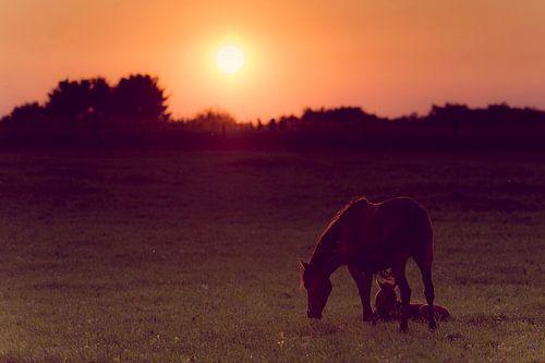 Paard en veulen met zonsondergang